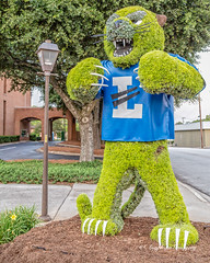Bearcat Topiary (augphoto) Tags: augphotoimagery creative mascot plants sculpture sports topiary unusual greenwood southcarolina unitedstates