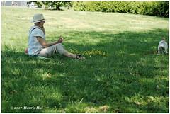 Happiness Is Contagious - Trout Lake Park XP6588e (Harris Hui (in search of light)) Tags: harrishui fujixpro2 digitalmirrorlesscamera fuji fujifilm vancouver richmond bc canada vancouverdslrshooter mirrorless fujixambassador xt1 fujixcamera fujixseries fujix fuji60mmf24macro fujiprimelens fixedlens standardlens dog catchtheball dogowner park troutlakepark lawn happiness happinessiscontagious seeingthehappyscene eastvancouver johnhendrypark weekend summer shade
