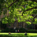 Cambridge Leafy Shade