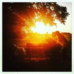 Sunset selfie (pjwebbs) Tags: sunset iphone selfie summer bright walking instagram hipstermatic light country sun intothesun