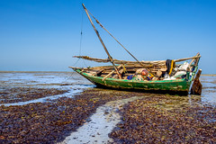 Écueil (michelgroleau) Tags: bateau boat pêche pêcheur fisherman fishing pitfall tide gully rigole marée tanzanie tanzania sea mer océan ocean bagamoyo