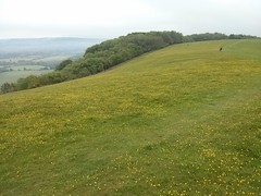Devils Dyke to Chanctonbury Ring (Dominic's pics) Tags: south downs way