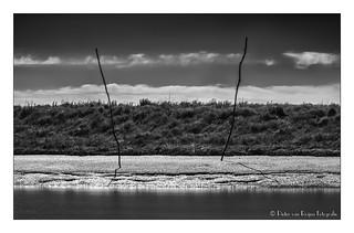 Noordpolderzijl salt marsh.