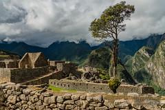 Machu Picchu -_DSC0600