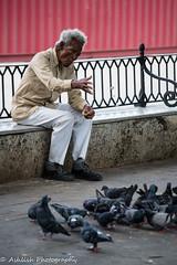 When I'm 64 (Sue M2009) Tags: sgtpepperslonelyheartsclubband man elderly cuba cuban feedingthebirds lonely alone