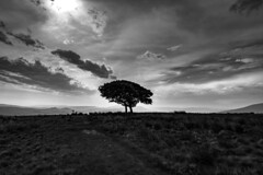 colour is over-rated (Phil-Gregory) Tags: mono monochrome bw landscape scenicsnotjustlandscapes tree lonetree silhouette nikon d7200 tokina 1120mm 1120mmf28 11 ultrawide wideangle peakdistrict peace fly field beauty