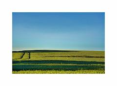 Summer lines (CJS*64) Tags: summer lines field colour sky green blue farming farm cjs64 craigsunter cjs nikon nikkorlens nikkor nikond7000 dslr d7000 18mm105mmlens 18105mmlens landscape