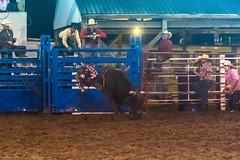 DSC_4382-Edit (alan.forshee) Tags: rodeo horse cow ride fall buck spin twirl bull stallion boy girl barrel rope lariat mud dirt hat sombrero