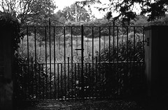 Ferrania P30 - Gate (Man with Red Eyes) Tags: p30 ferrania p30alpha iso80 p3017001 filmtest f100 nikonf100 nikon 50mmf18ai nikkor kodak hc110 160 12mins 70f semistand reducedagitation analog analogue v850 matrix blackwhite monochrome silverhalide filmisnotdead filmtilidie bnw northwest lancashire gate