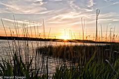 IMG_2017_06_04_3665-Bearbeitet (H.Spiegel) Tags: grammersdorf ostsee hemmelsdorfer see holstein sonnenuntergang gräser