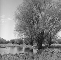 Oxbow lake near Bratwin // Starorzecze na wysokości Bratwina (Other dreams) Tags: bratwin pomerania poland landscape oxbow bw rolleiflex35e xenotar 75mm fp4 square 6x6 willows spring april analog film