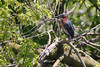 _53F8966 Green Heron (~ Michaela Sagatova ~) Tags: greenheron birdphotography canonphotography heron michaelasagatova