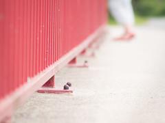 Red fence - HFF! (A_Peach) Tags: gx8 samyang sommer availablelight fence summer mft m43 lumix panasonic microfourthird micro43 apeach anjapietsch dof bokeh samyang85mmf14 manualfocus panasoniclumixgx8 red