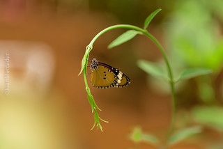 Sin cambio, no hay Mariposa