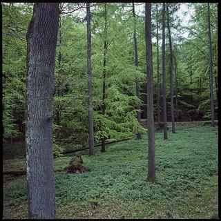 Outdoor green room