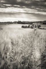 Lady (frantiekl) Tags: lady walk walking people path light clouds sky nature landscape bw bnw blackwhite blackandwhite mono monochrome 50mm life day june countryside country field happy pretty