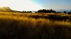 goldenes Morgenlicht (somareja*pictures) Tags: somarejapictures markusreber flickr natureshot natur sonnenlicht imsonnenlicht sonnenaufgang gerstenfeld morgenstunde morgenstimmung
