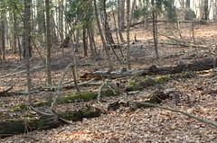 Ojcowski National Park 697. Wood at decay stage. (Hejma (+/- 5400 faves and 1,7 milion views)) Tags: ojcowski national park trees wood decay stage atumn leaves