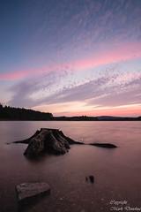 blessington lake.jpg (Sharkie1968) Tags: lake water sunset tree blessington co wicklow ireland