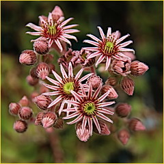 170618 Edwards Gardens (88) (Aben on the Move) Tags: toronto ontario canada park flower garden nature edwardsgardens