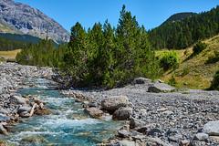 Grisons Parc national (Meinrad Périsset) Tags: grisons graübunden cantondesgrisons nature paysage alpessuisses swissmountains switzerland suisse schweiz swizzera nikon nikond800 d800 captureone10