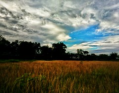 🌾🌾🌲🌲 (Ifti Akhand) Tags: sky landscape clouds cloudy nature beautiful beaty beautyofnature beautyqueen colorvibe colours colourful tree field grass darker blue