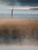 Sea Layers (trm42) Tags: summernight gearhobby nightmood landscape kevätyö em1mk2 finland nature newcamera gas nightfog viikki helsinki suomi sea yötunnelma tunnelma kesäyö couldbepainting silhouette olympusomd vanhankaupunginlahti seafog field tele foggy maisema finnishnight branches classical dramatic