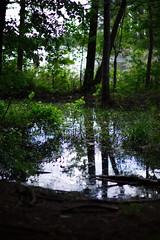 walk about Harris Lake 33 (furrycelt) Tags: harrislake newhillnc nikon85mmf14afd nikon85mmf14 northcarolina shearonharrisreservoir ianwilson jianwilson photographersoftumblr 85mm d600 nikon forest furrycelt lake lensblr natural nature trees water woods