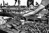 fish market-2 (Bruno Laria) Tags: am amazonas américadosul br bra brasil estadodoamazonas amazonia ambiente humano humanos luademel pessoa pessoas rio serhumano sereshumanos social sociedade tapajos água
