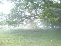 Devils Dyke to Chanctonbury Ring (Dominic's pics) Tags: south downs way mist hillmist