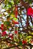 Crustacean (LarryJay99 ) Tags: efs18135mmf3556is reds windchimes colornature bokeh green westpalmbeach florida bougainvillea