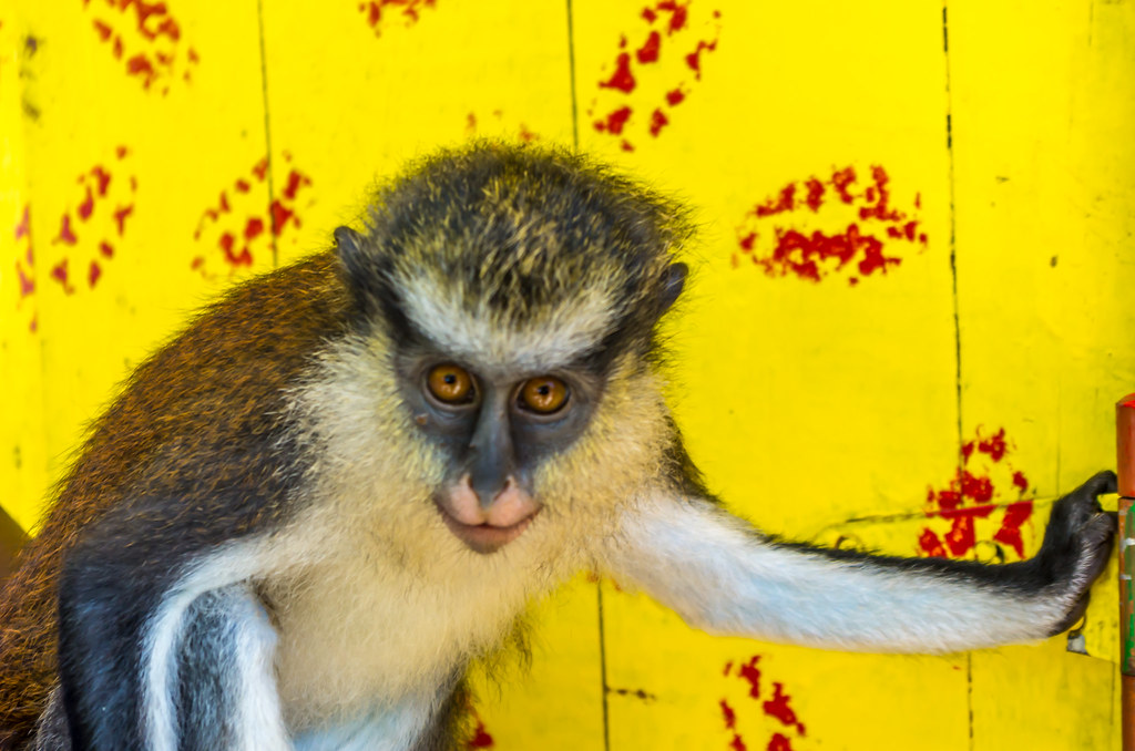 Caribbean Animals: The World's Most Recently Posted Photos Of Grenada And