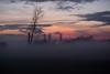 Unbekann-7 (wolfgangschiller) Tags: abend abenddämmerung abendrot badenwürttemberg baum bäumesträucher deutschland dämmerung europa himmel hockenheim lebewesen nebel tageszeiten wetter witterung wolken zeit