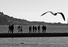 El seguimiento (carlos_ar2000) Tags: rio river gente people gaviota seagull playa beach dof street lisboa portugal