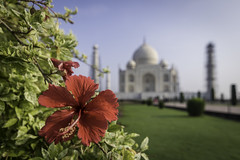 Gud Motning Taj (Ashmalikphotography) Tags: tajmahal agra monuments india incredibleindia mughalarchitecture mughalera mughals mughalfinalrestingplace madeformughals colors