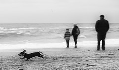 sea life (photoksenia) Tags: sea beach odessa ukraine dog monochrome blackandwhite bw people