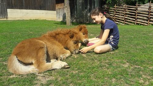 Das Leben ist ein Ponyhof ❤