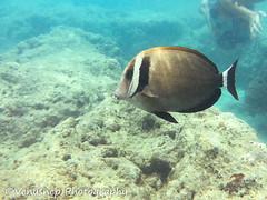 Hanauma Bay 16 (venusnep) Tags: hanaumabay hanauma bay underwater tropicalfish tropical fish iphone watershot watershotpro hawaii snorkeling travel travelphotography may 2018