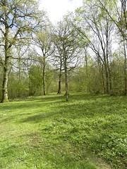 WOODLAND WALK (conespider) Tags: woods woodland trees grass westonbirt arboretum landscape 2017 nikon