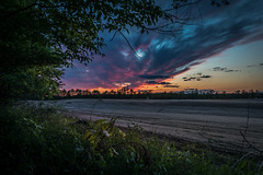 out of the woods (Christian Collins) Tags: canoneos5dmarkiv canon deer snort field sunset atardecer plowed clouds woods bosque weeds branches michigan midmichigan midland summer june