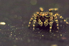 хижак (zool18) Tags: sweet spider macro mark2 amazing home animal insect life picture lviv ligth flickr nature canon contrast color house
