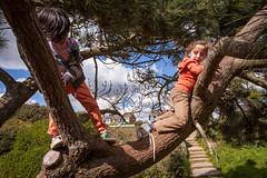 Sam Bournemouth-12.jpg (Reasonable Jim) Tags: bournemouth cassius dante southbourne climbing tree treeclimbing
