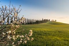 A9905702_s (AndiP66) Tags: agriturismopoggiocovili agriturismo poggio covili zypressen cypresses zypressenstrasse cypressstreet sonnenaufgang sunrise nebel dunst fog mist sonne sun morgen morning april spring frühling 2017 siena pienza sanquiricodorcia valledorcia valle dorcia toscana tuscany italien italy sony alpha sonyalpha 99markii 99ii 99m2 a99ii ilca99m2 slta99ii tamron tamronsp1530mmf28diusd tamron1530mm 1530mm f28 amount andreaspeters