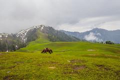 IMG_9497 (mimalkera) Tags: kaghanvalley naran kaghan shogran siripaye payemeadows lakesaifulmalook travelpakistan travelbeautifulpakistan travel wanderlust