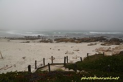 Asilomar State Beach (Narwal) Tags: pacificgrove california ca usa 美國 加州 太平洋叢林 asilomar state beach