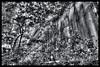 Tokyo Metropolitan Area: Impressions of a great city (Matthias Harbers) Tags: photoshop test chiba japan park history historic bw black white outdoor architecture elements topaz labs omot tokyo metropolitan living home bike monochrome city street life impression blackandwhite photo border kashiwa zs100 tz100 panasonic dmctx1 hdr photomatix 3xp trees
