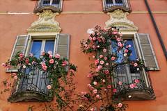 I balconi fioriti di Vogogna (ornella sartore) Tags: balconi finestre fiori natura primavera colori allaperto particolari taglio dei