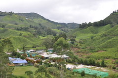 DSC_2540 (fuyichin) Tags: 20160824camerontang cameronhighland