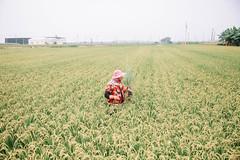 (Kevin .H) Tags: 台灣 彰化 雲林 褒忠 廢墟 田野 稻米 鄉村 taiwan changhua yunlin country canon 5d2 5dii 2470mm 35mm photography portrait light sunshine