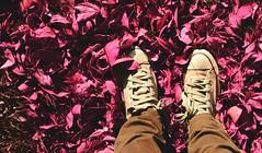 Yo voy conmigo a todas partes. Mi mundo soy yo, y mis sueños (Carolina.carol) Tags: nature naturaleza rosa pink fotografía photography policromatico polychromatic phography